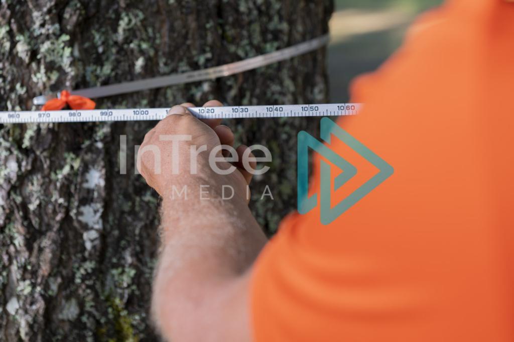 Arborist_Photo_001_21-3471