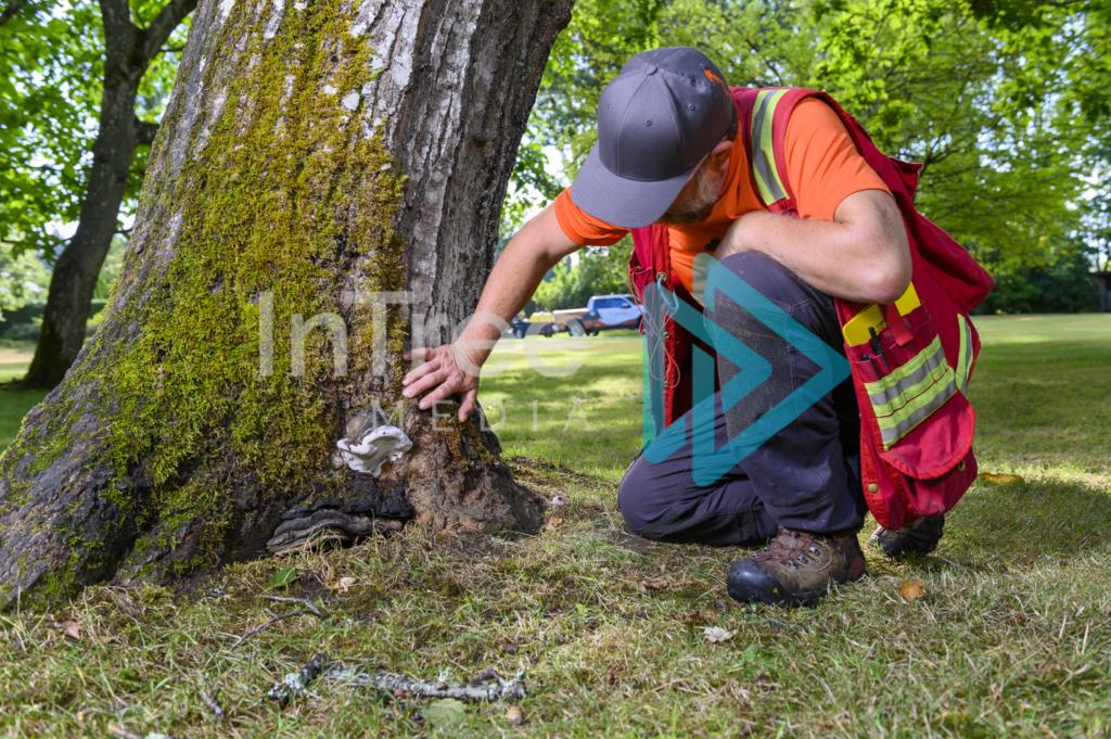 Arborist_Photo_001_21-3532