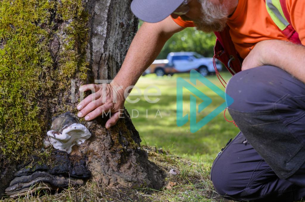 Arborist_Photo_001_21-3534