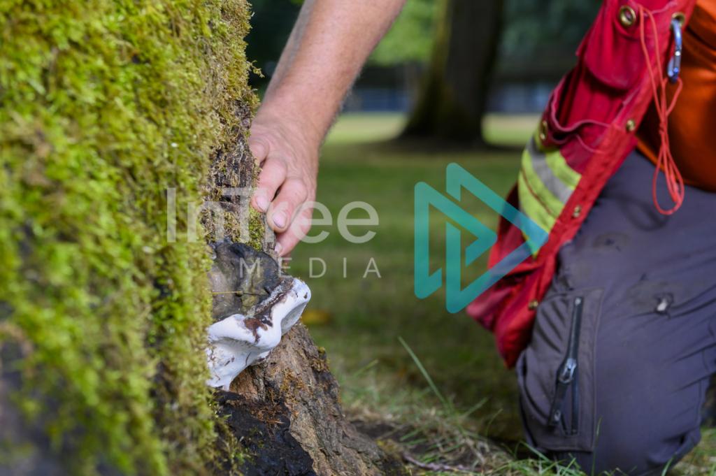 Arborist_Photo_001_21-3548