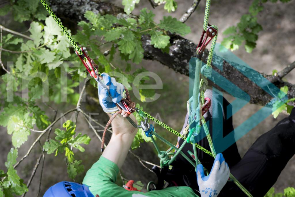 Arborist_climbing_system_001_7376