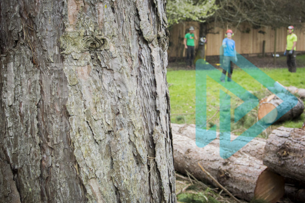 Protected: Base-of-tree-with-arborists-blurred-in-backgroound-InTree-arborist-image-001-9919