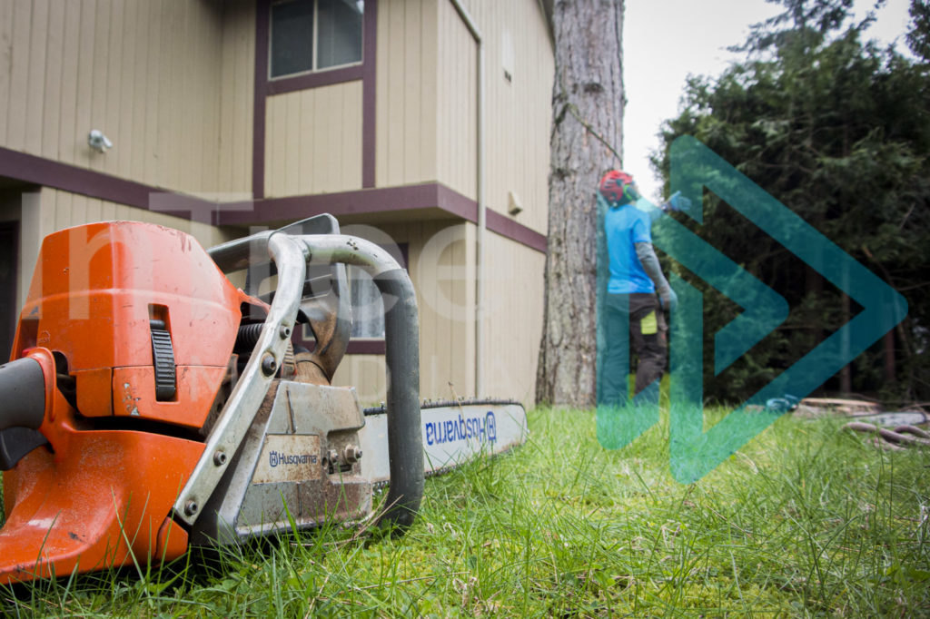 Protected: Chainsaw-laying-on-ground-with-arborist-in-background-InTree-arborist-image-001-9933