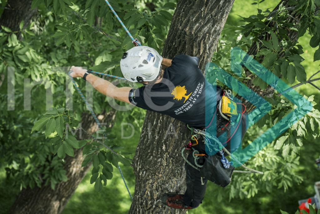 Protected: Climbing_arborist_in_tree_with_rope_001_7304