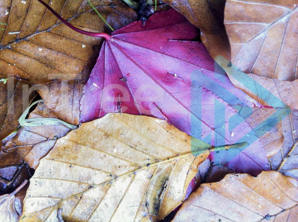 Protected: Colourful_Autumn_leaves_on_ground_001_1293