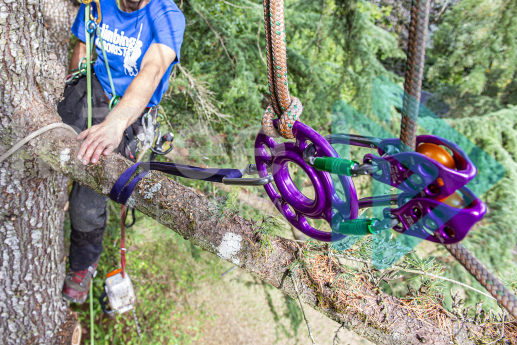 Protected: DMM_rigging_setup_with_arborist_in_tree_001_1178