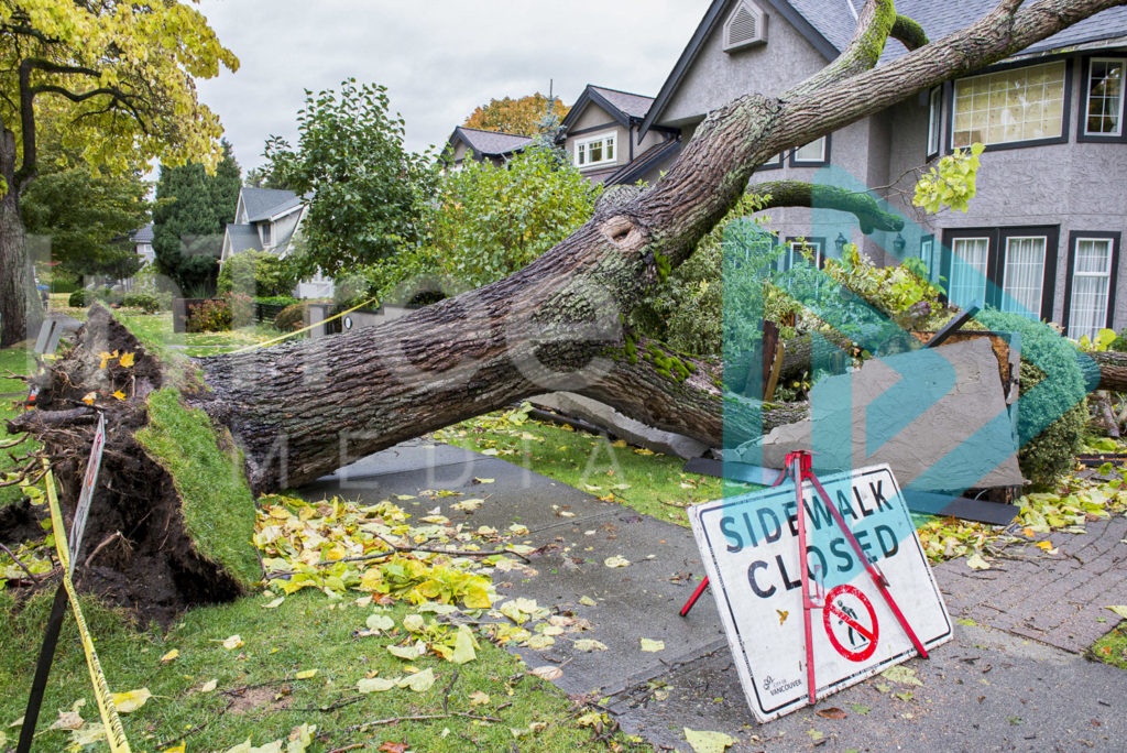 Protected: Fallen_tree_on_house_001_2
