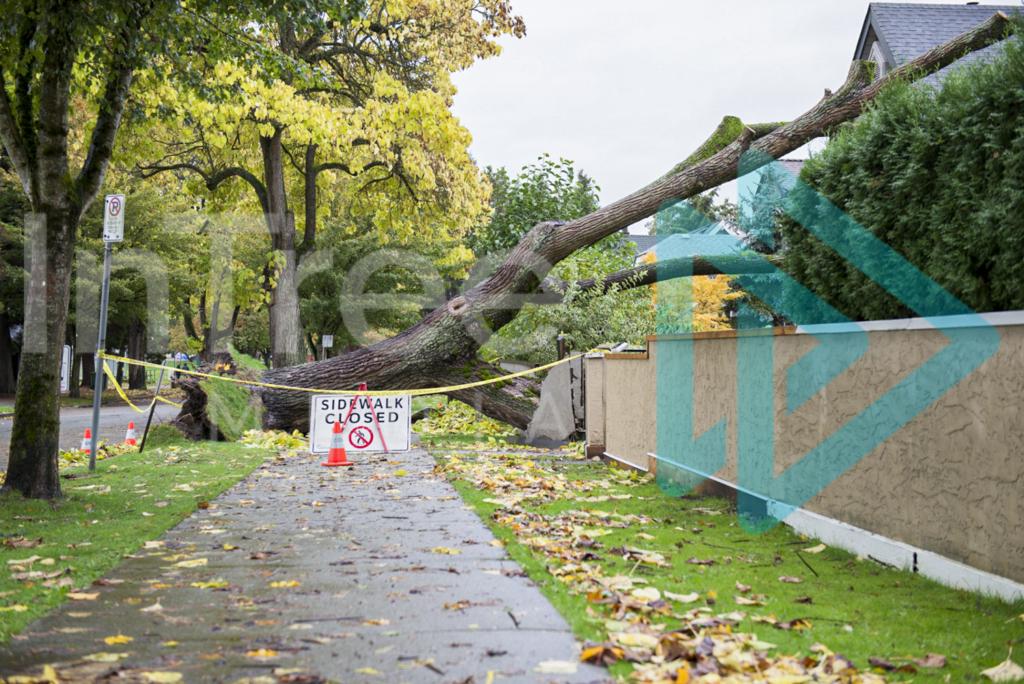 Protected: Fallen_tree_over_sidewalk_001_5