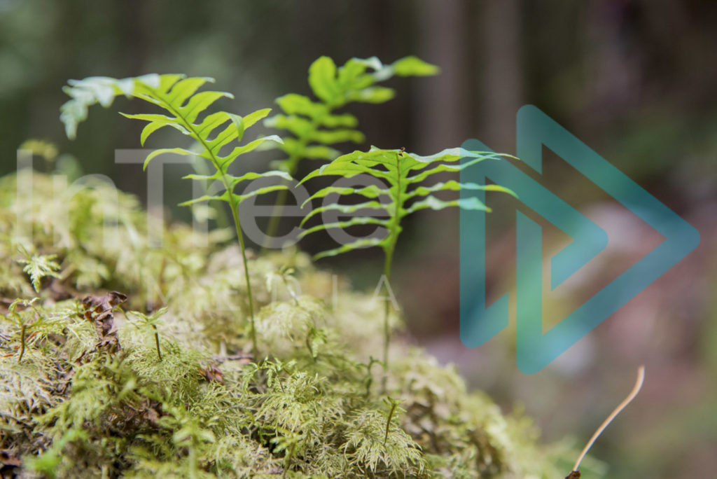 Protected: Fern_growing_from_moss_001_0501