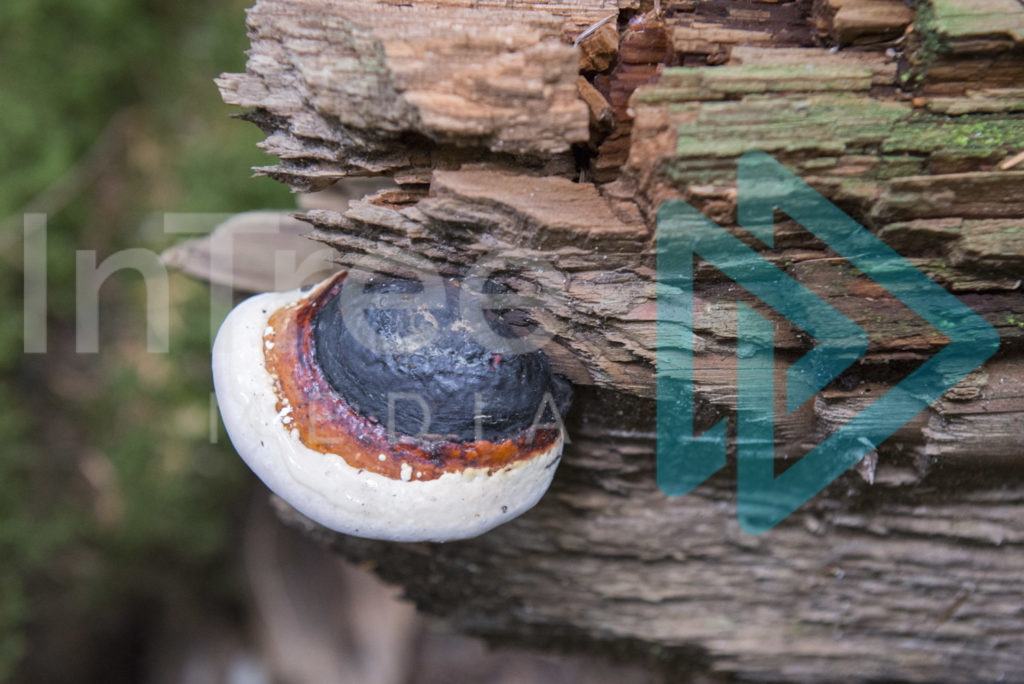 Protected: Fungus_growing_from_log_001_0504
