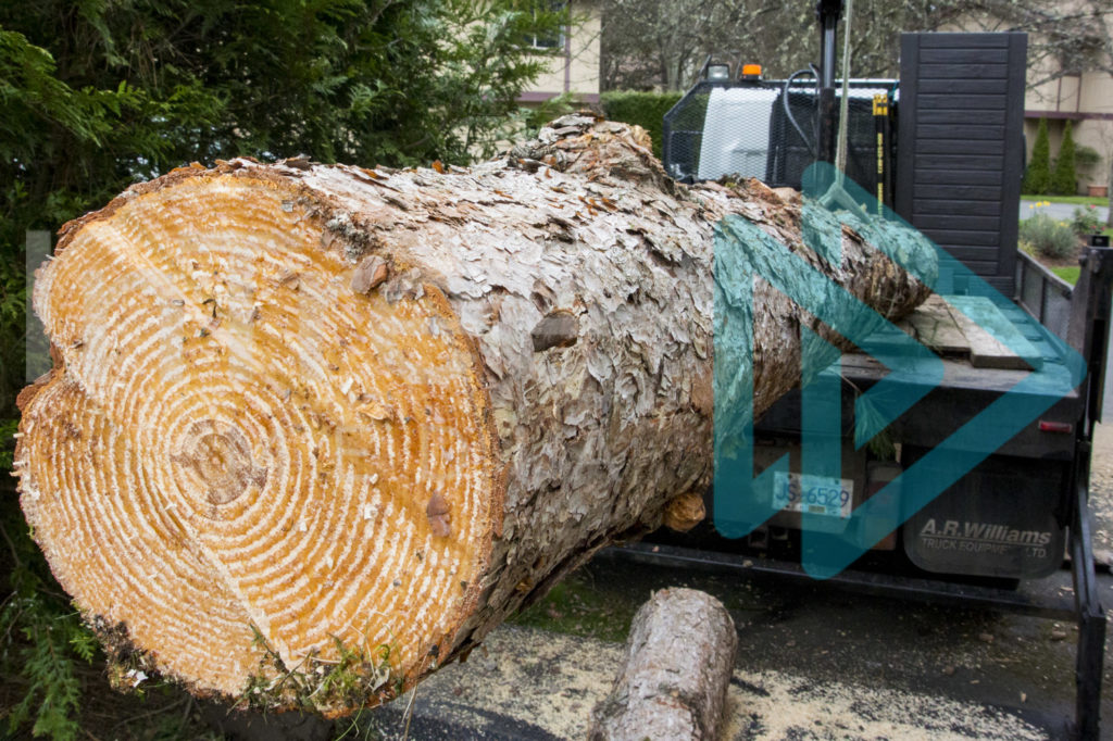 Protected: Large-log-being-lifted-with-HIAB-InTree-arborist-image-001-9972