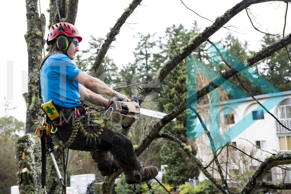 Protected: Male-arborist-on-rope-in-tree-cutting-branch-with-chainsaw-InTree-arborist-image-001-5630