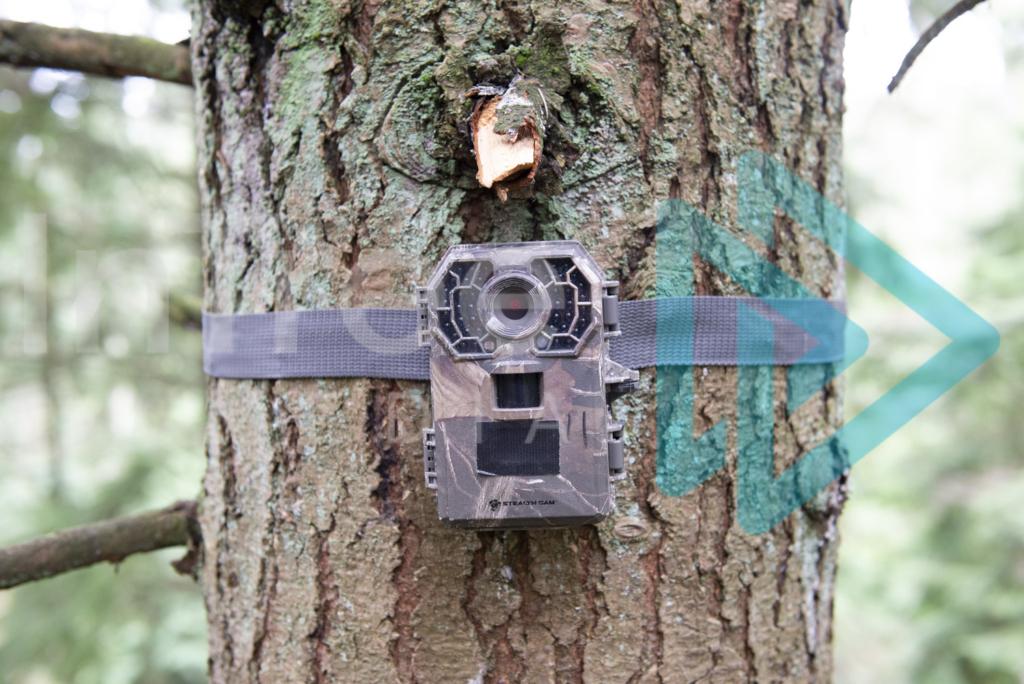 Protected: Wildlife-Camera-installed-in-tree-InTree-arborist-image-001-6245