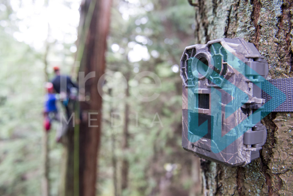 Protected: Wildlife-Camera-installed-in-tree-with-climbers-in-background-InTree-arborist-image-001-6159
