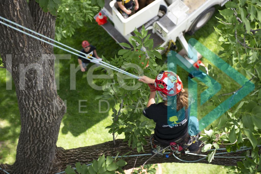 Protected: female_arborist_climbing_in_tree_001_7039