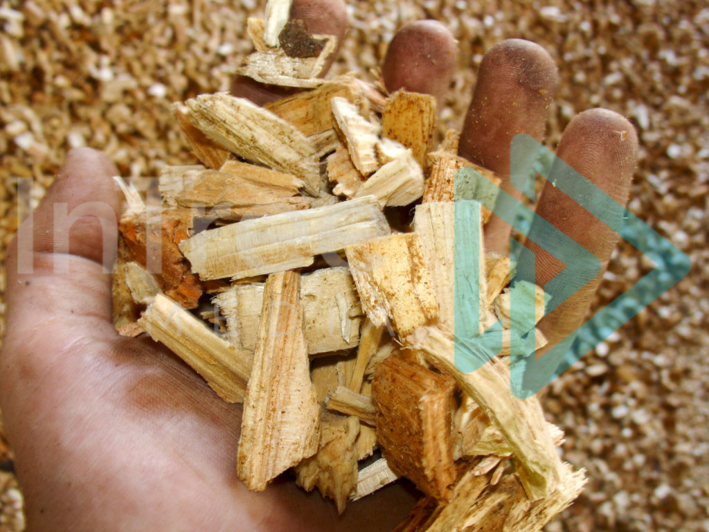woodchip_in_a_hand_001_00051